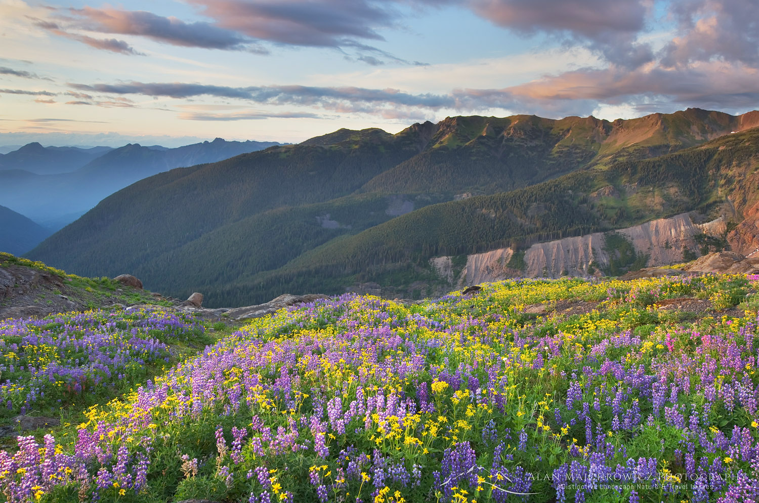 Heliotrope Ridge Wildflowers North Cascades