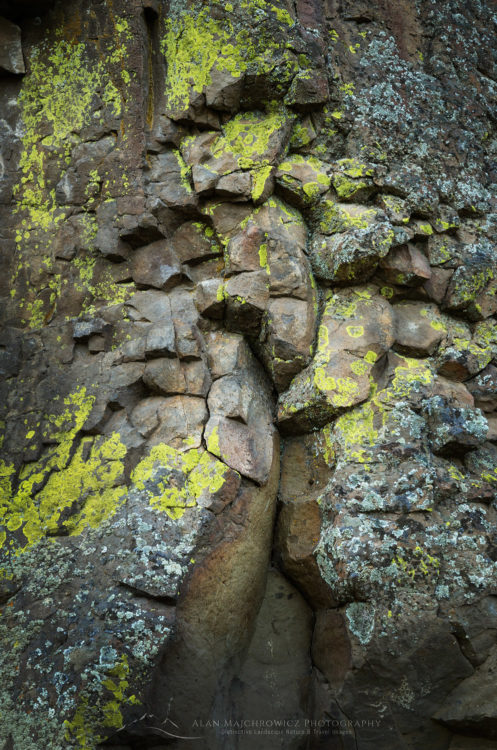 Lichens on basalt