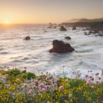 Sunset Sonoma Coast wildflowers, California