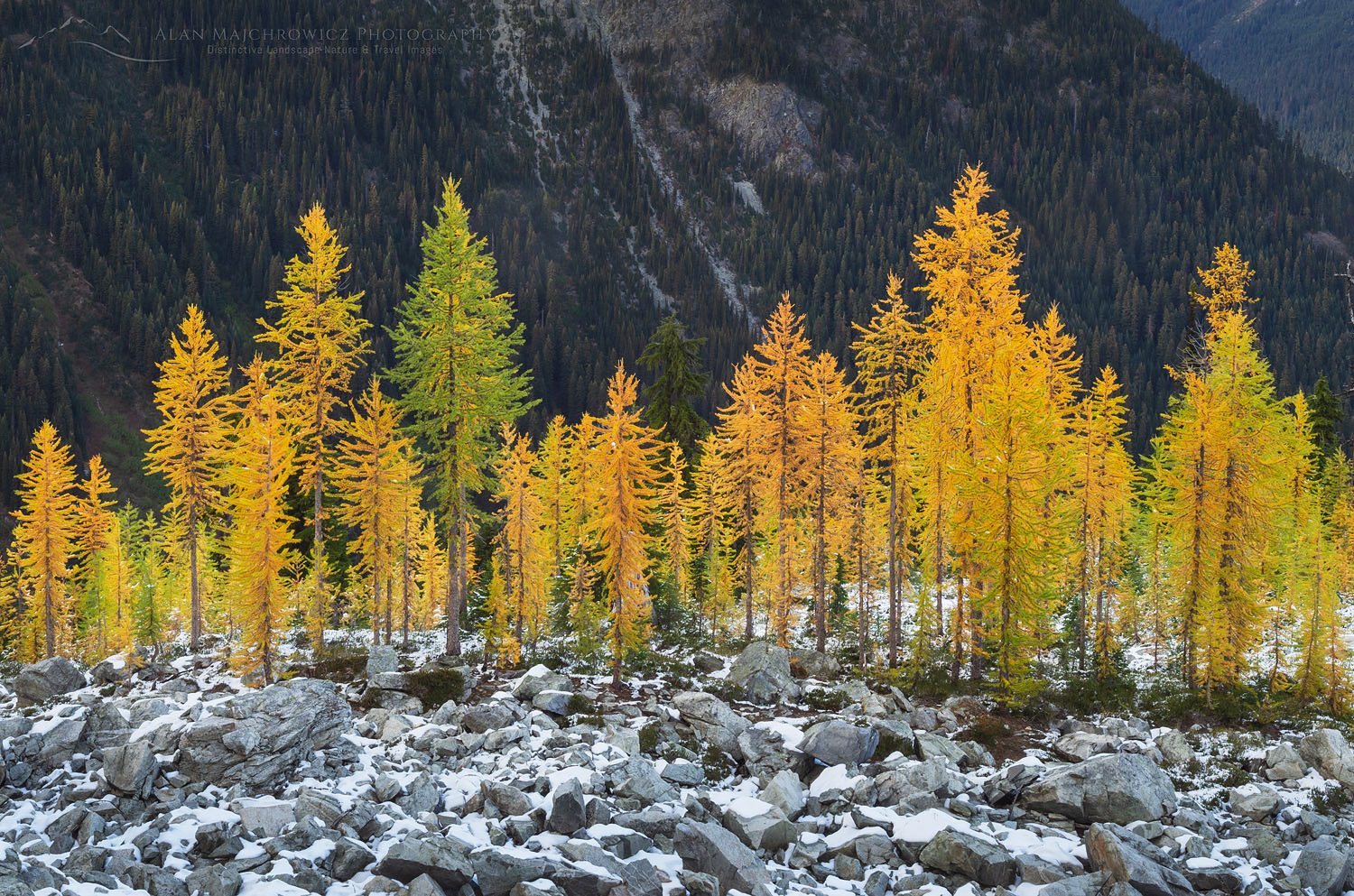 Alpine Larches North Cascades