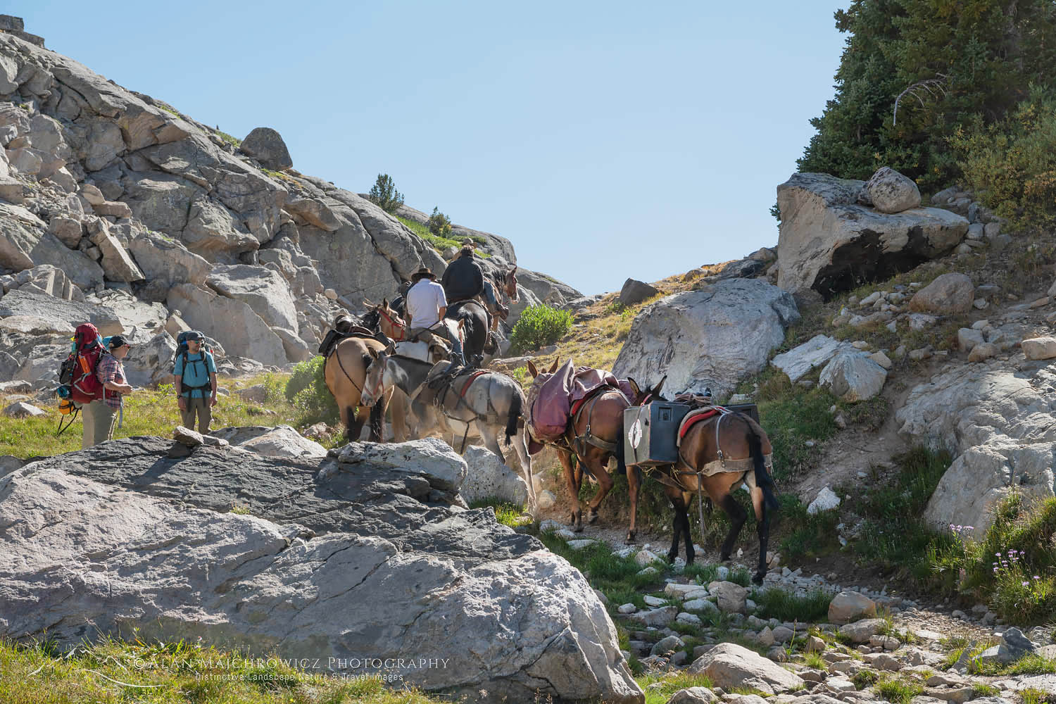 Horse packing Bridger Wilderness Wyoming