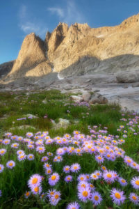 Mount Helen and field of purple Asters growing in Upper Titcomb Basin, Bridger Wilderness, Wind River Range Wyoming