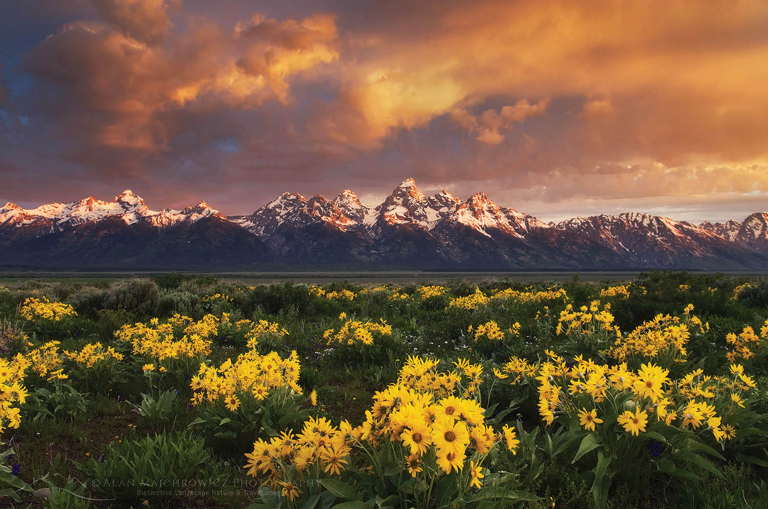 Wildflowers Grand Teton National Park Wyoming Grand Teton Photography Trip Planning