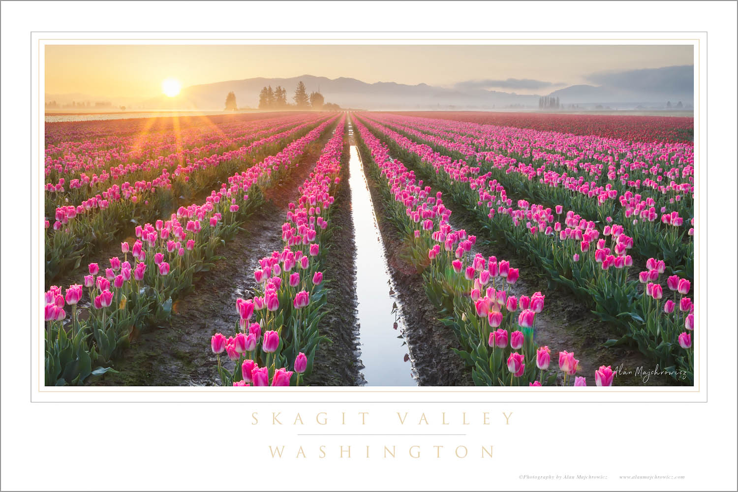 Sunrise over Skagit Valley tulip fields, Washington