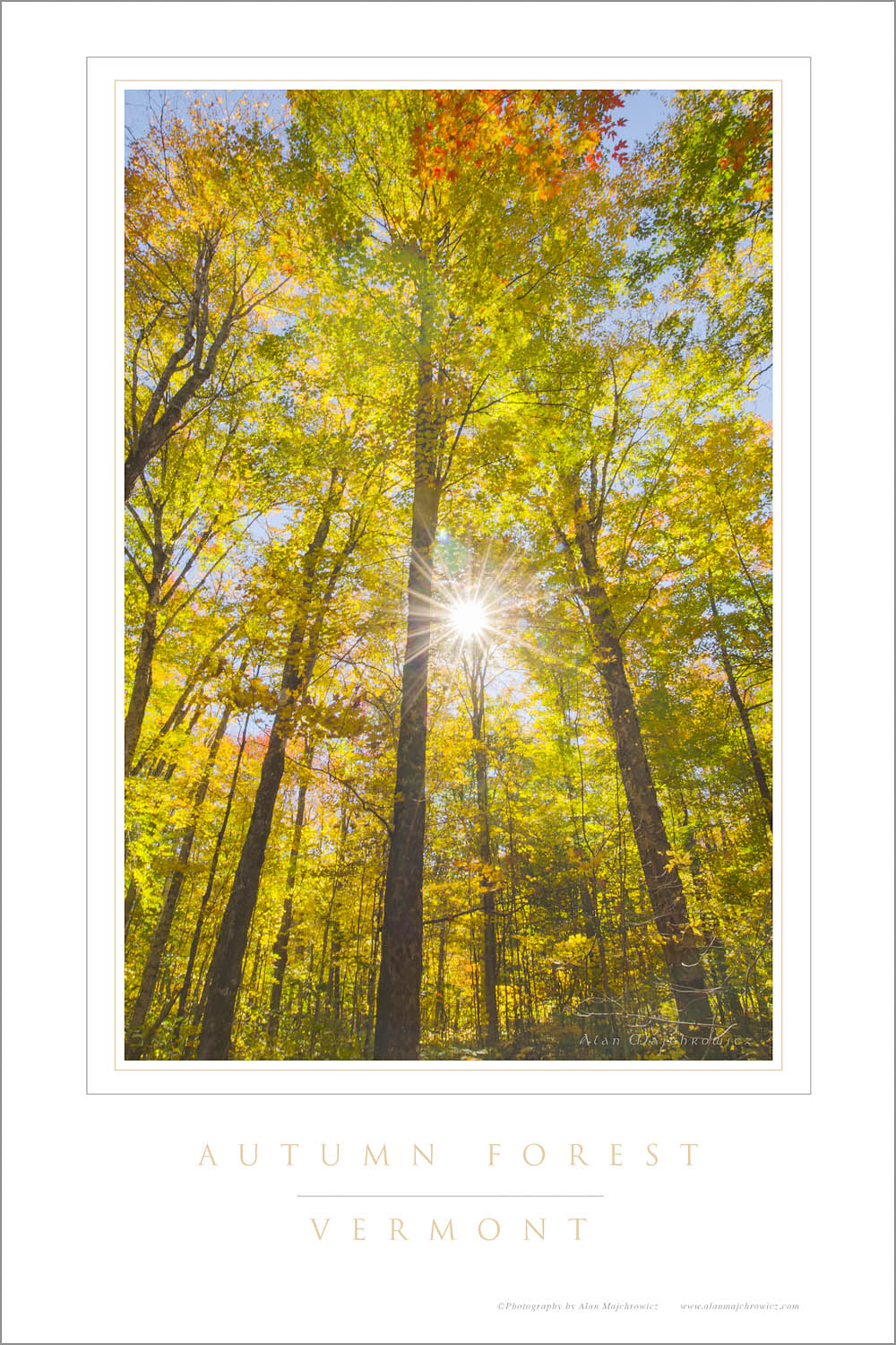 Sun rays bursting through trees in golden fall foliage, Groton Woods, Vermont